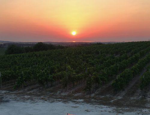 Le mie vigne di Nero d'Avola